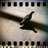 May 3rd I: Pigeon