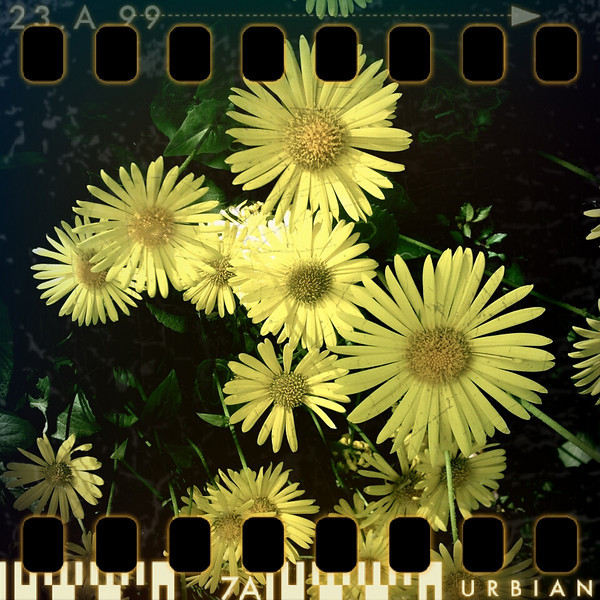 May 2nd II: Yellow flowers