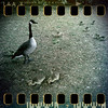 May 16th: Mother Goose and the little ones