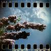 May 2nd I: Lilac