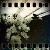 May 15th: Hidden roses
