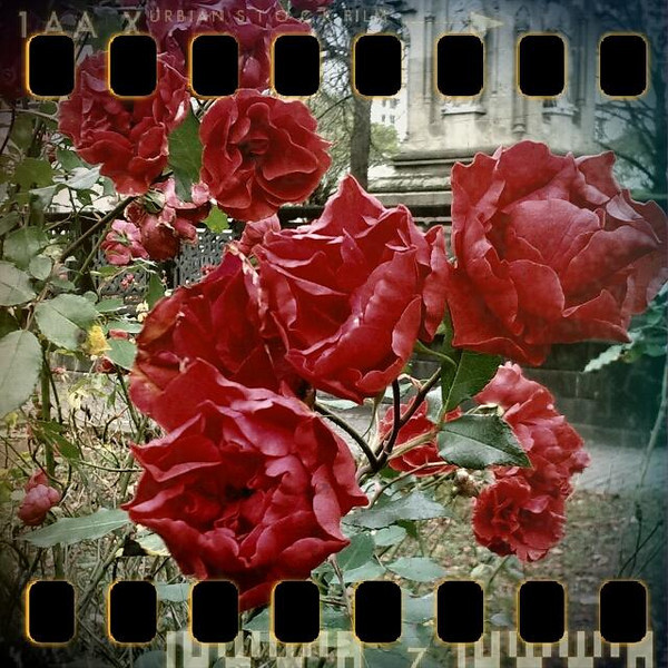 November 18th II: ... to the roses.