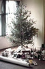 1969 - christmas tree-commodore