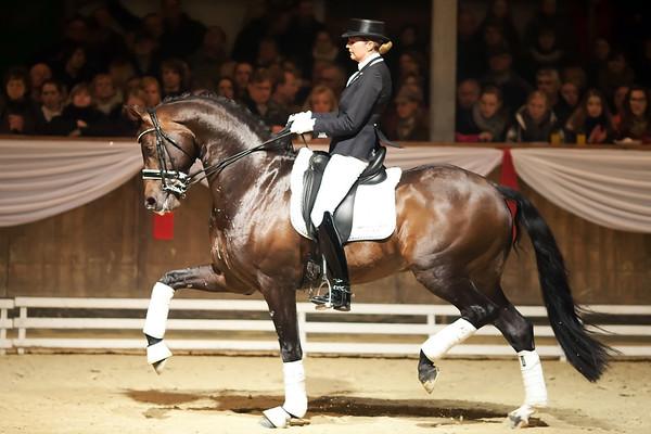 120224 Ferienhof Stuecker Stallion Show