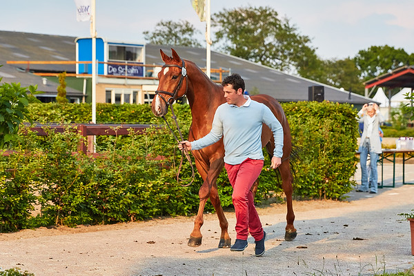 190529 CCI2*-L First Horse Inspection Renswoude