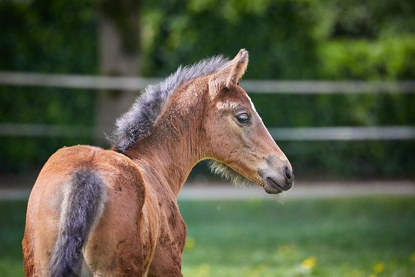 200425 Foals and mares