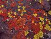 Lichen Palette, Whychus Creek - Fred Fost