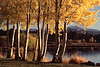 Fall Evening at Black Butte Ranch by Sue Anderson