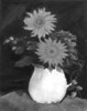 Sunflower-Mary Smith
