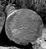 Log Gray
