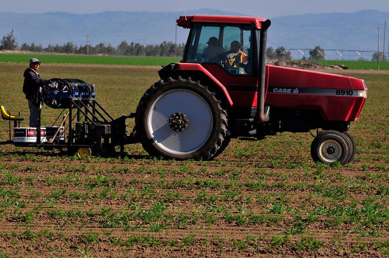 0901, Applying individual drip irrigation tubes in a carrot field. Madras, Oregon - Bill Volmer