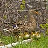 Birding Trip 5/25 Dick Tipton