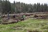 Deshutes Land - Wolftree-3509