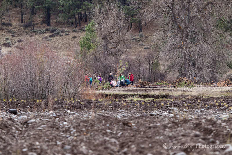 Deshutes Land - Wolftree-3490