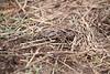 Deshutes Land - Wolftree-3410