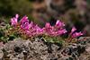 SAPC-Sues-wildflower3496