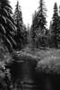 Link Creek - Sue Anderson