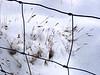 Fence & Snow - Sue Anderson