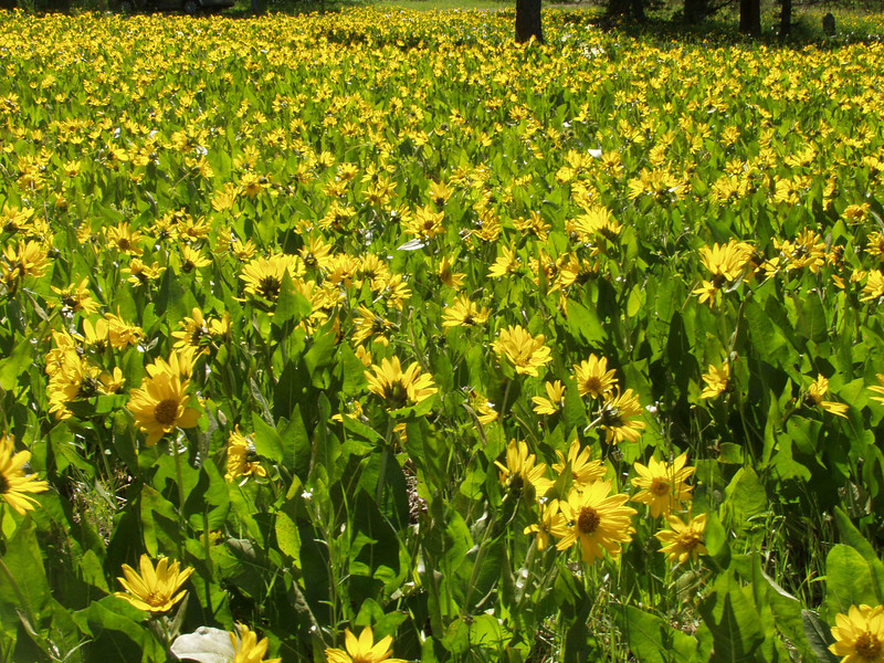 FLOWERS @ BIG SUMMIT PRARIE - DICK BRYANT