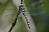 Dragonfly_Mary Smith