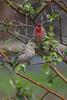 Birds in Bush<br /> Mary Smith