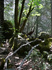 Bridal Veil Yosemite - Fred Fost