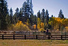 Cowboy at Black Butte Ranch, Kate Thomas Keown
