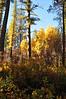 Shevlin Park  Aspen Grove, Bill Vollmer
