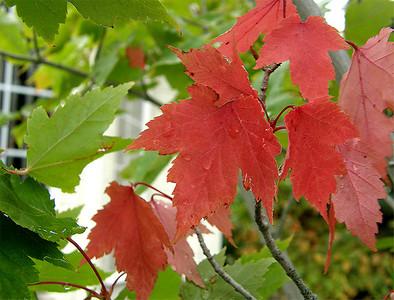 September 2008 Challenge - Autumn Color