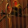 Birdsgonewild_EduardoSaez