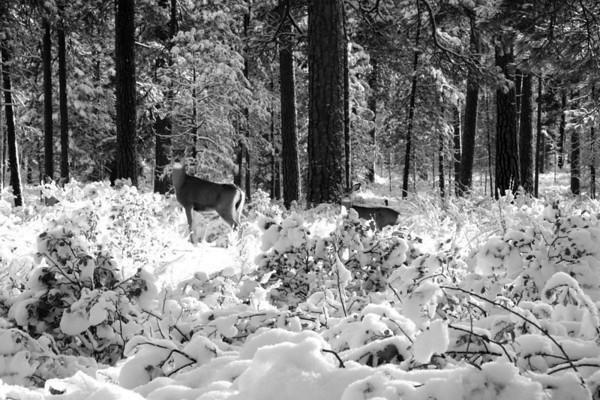 January 2009 Challenge - Winter Wildlife