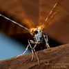 Insects hang out at their favorite lighting hole on a summer night - Gary Miller - Sisters Country Photography