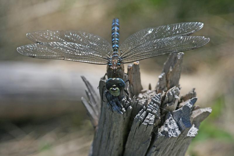 Happy dragonfly - Sue Anderson