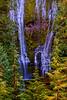 Proxy Falls  greg waddell