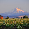 Mt Hood and Onion Seed in the morning. BV