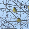 I photograph birds.