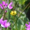 Mixed Bouquet - Rich Seiple
