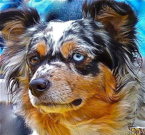 Sandy Koch---dog at Rodeo