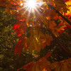 Dazzling Fall Color - Sue Anderson