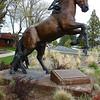 SAPC Horse Statue Shoot - Jackie Gerland