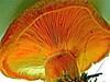 SAPC_Challenge_Closeup_Mushroom1_SandyKoch