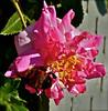 SAPC_Challenge_Closeup_Flower_SandyKoch