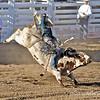 Spittin' bull