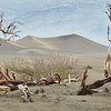Mesquite sand dune<br /> framed with tree skeleton