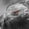 Bird's eye!