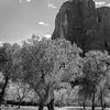 Mormon Grove