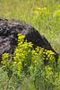 DarleneAshley_WildflowersYellow_12_0645