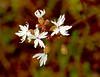 Spring desert flowers