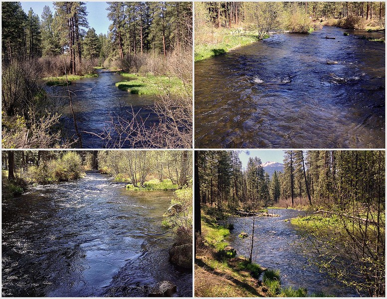 Spring on the Metolius River