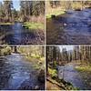 Spring on the Metolius River